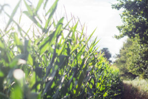 champs bordères