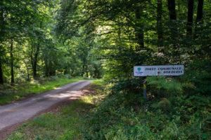 forêt communale de Bordères